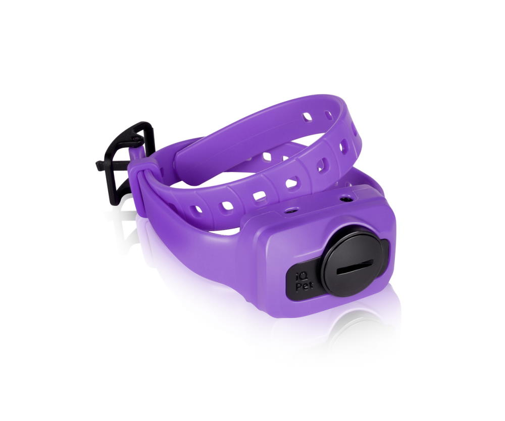 iQ CLiQ Receiver Purple(Additional)